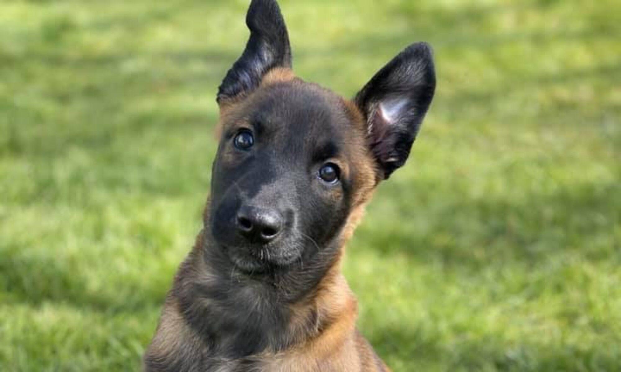 Hunden - hjemme og i træning